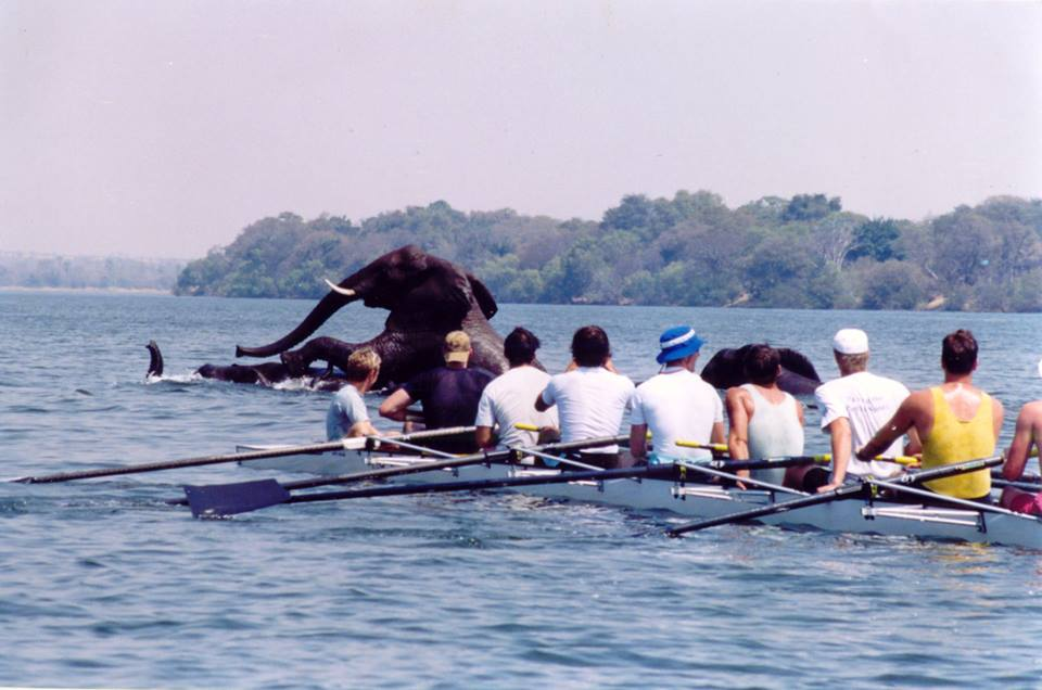 Elephant Rowing