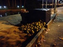 karon coconuts