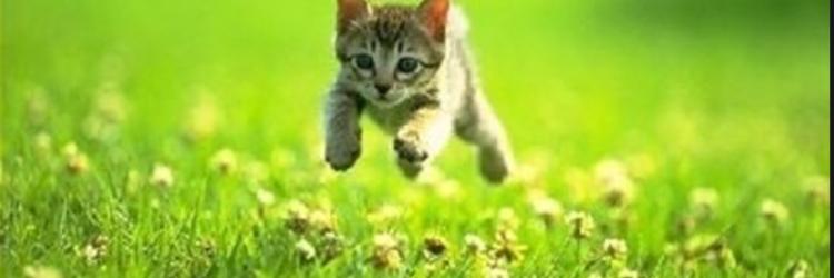 Kittens die if you rush the slide.